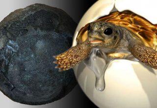 Çin'de Kretase Dönemi'ne Ait  Kaplumbağa Yumurtası Fosili